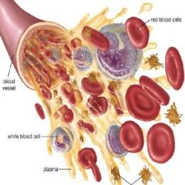 Повышение лейкоцитов в крови женщины после родов