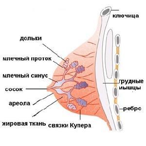 Подробное описание в разрезе