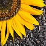Можно ли кормящей маме кушать семечки и как это может отразиться на здоровье малыша