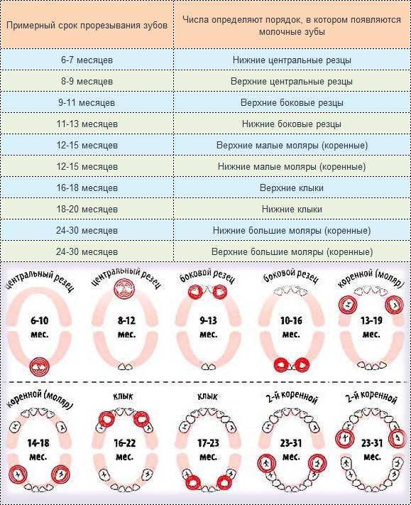 Схема предоставлена детским стоматологом