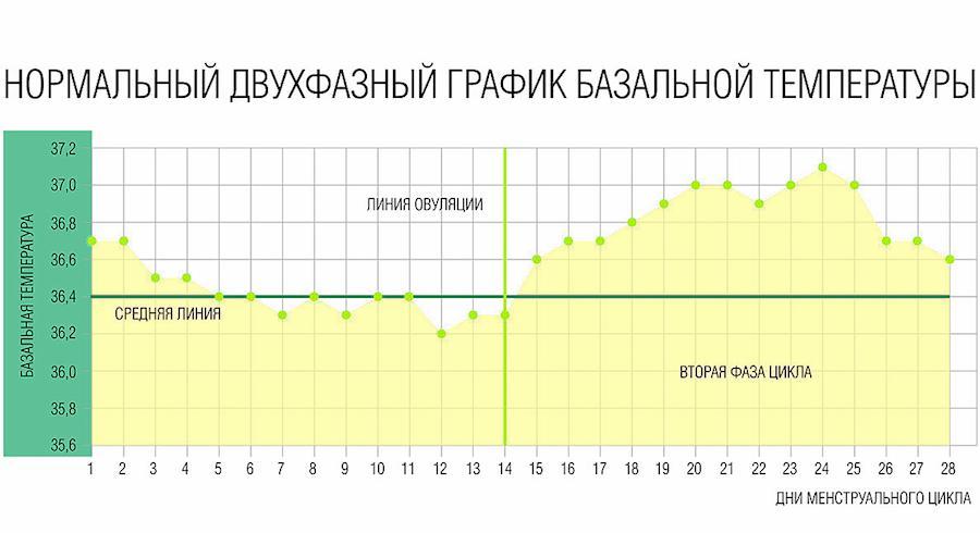 График измерений базальной температуры на протяжении месячного цикла