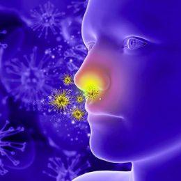 Монастырский чай от аллергии: результаты клинических исследований и отзывы врачей